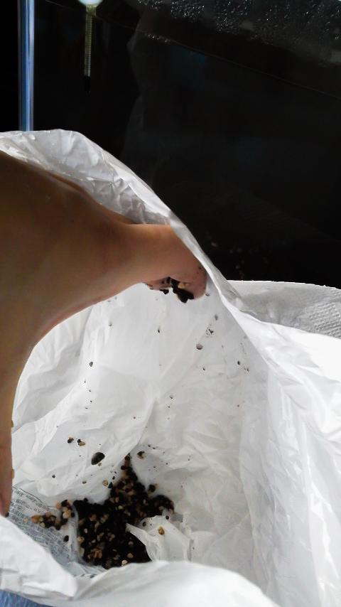 ソイルをビニール袋に捨てる