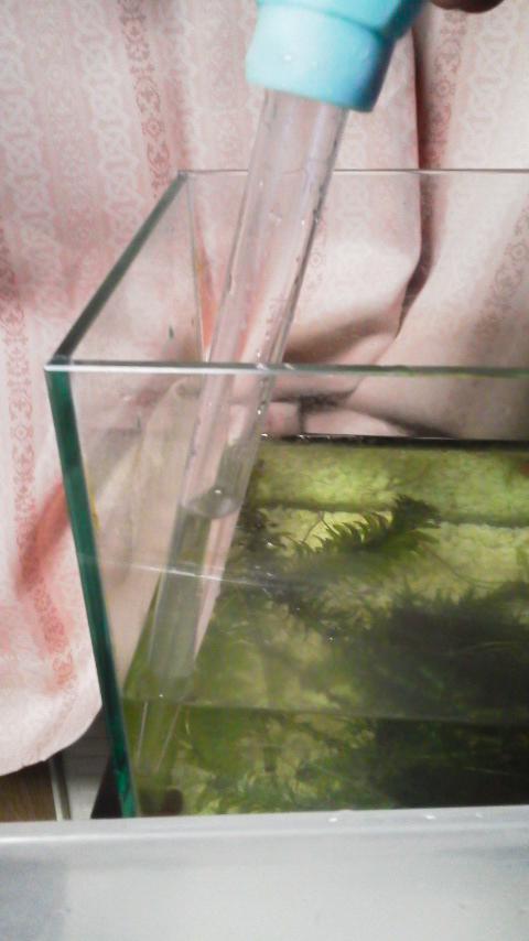 引っ越し前水槽の水を捨てる