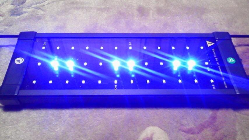Zitradesの青色のみ点灯状態