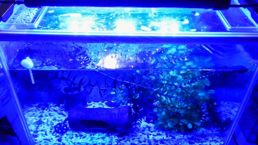 Zitradesを水槽にセットし青色のみ点灯