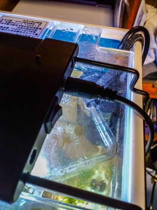 フタを閉じた水槽に設置した隔離容器