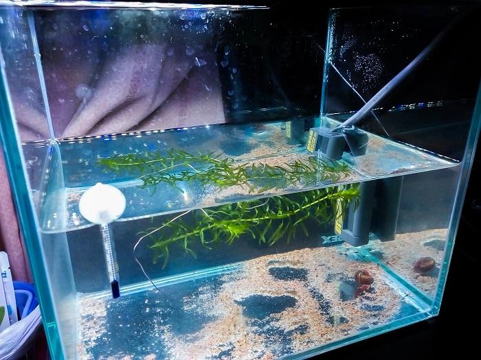 新たに立ち上げた稚魚専用水槽
