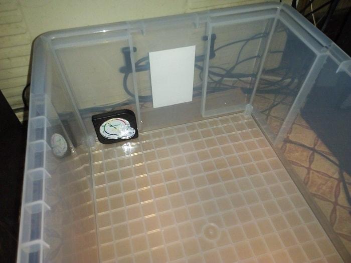 温度計を設置した飼育容器